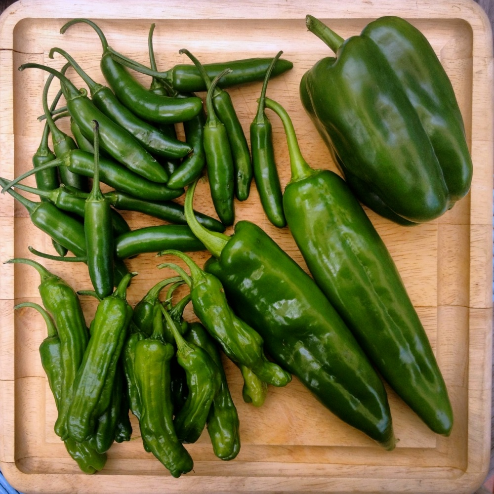 Pepper harvest: Serrano, California Wonder Bell, Anaheim, Shisito